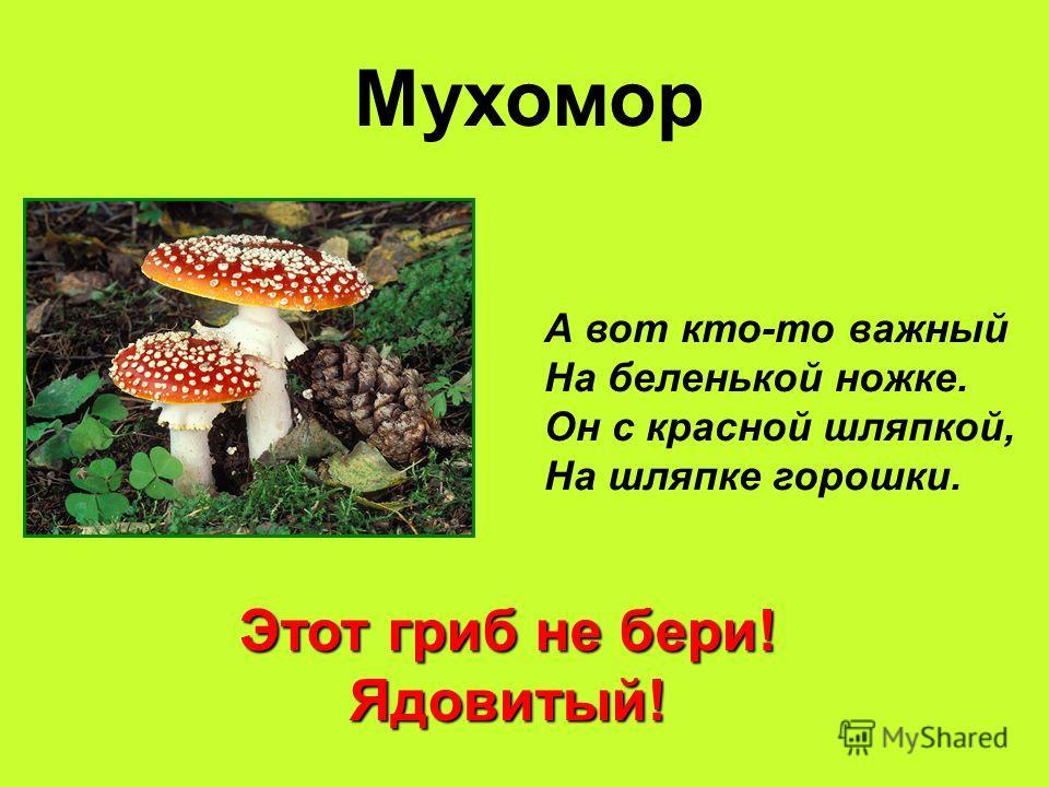 Мухомор А вот кто-то важный На беленькой ножке. Он с красной шляпкой, На шляпке горошки. Этот гриб не бери! Ядовитый!