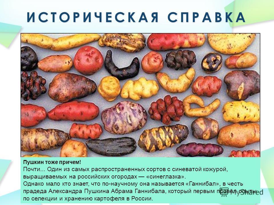Пушкин тоже причем! Почти... Один из самых распространенных сортов с синеватой кожурой, выращиваемых на российских огородах «синеглазка». Однако мало кто знает, что по-научному она называется «Ганнибал», в честь прадеда Александра Пушкина Абрама Ганн
