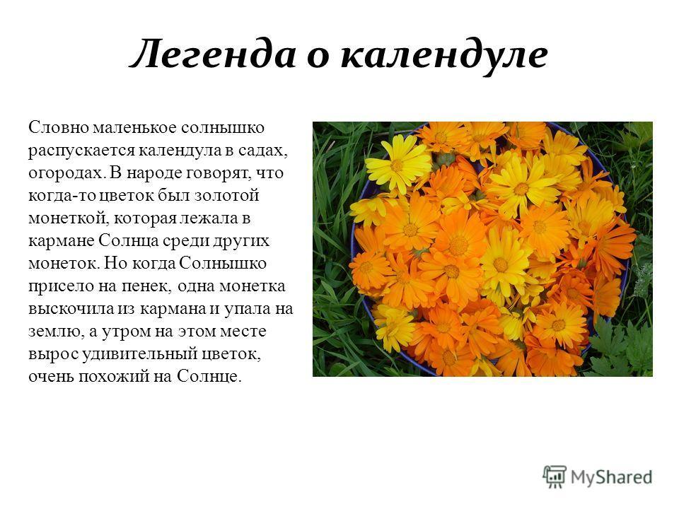 Легенда о календуле Словно маленькое солнышко распускается календула в садах, огородах. В народе говорят, что когда-то цветок был золотой монеткой, которая лежала в кармане Солнца среди других монеток. Но когда Солнышко присело на пенек, одна монетка