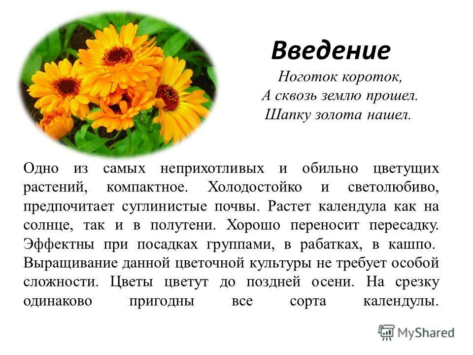 Одно из самых неприхотливых и обильно цветущих растений, компактное. Холодостойко и светолюбиво, предпочитает суглинистые почвы. Растет календула как на солнце, так и в полутени. Хорошо переносит пересадку. Эффектны при посадках группами, в рабатках,