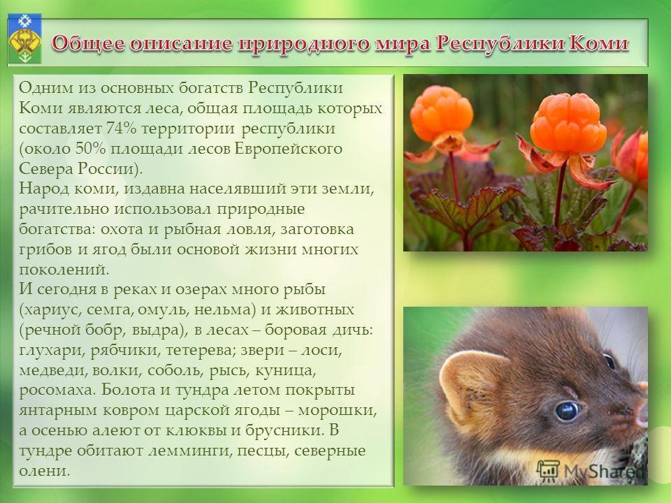 Одним из основных богатств Республики Коми являются леса, общая площадь которых составляет 74% территории республики (около 50% площади лесов Европейского Севера России). Народ коми, издавна населявший эти земли, рачительно использовал природные бога