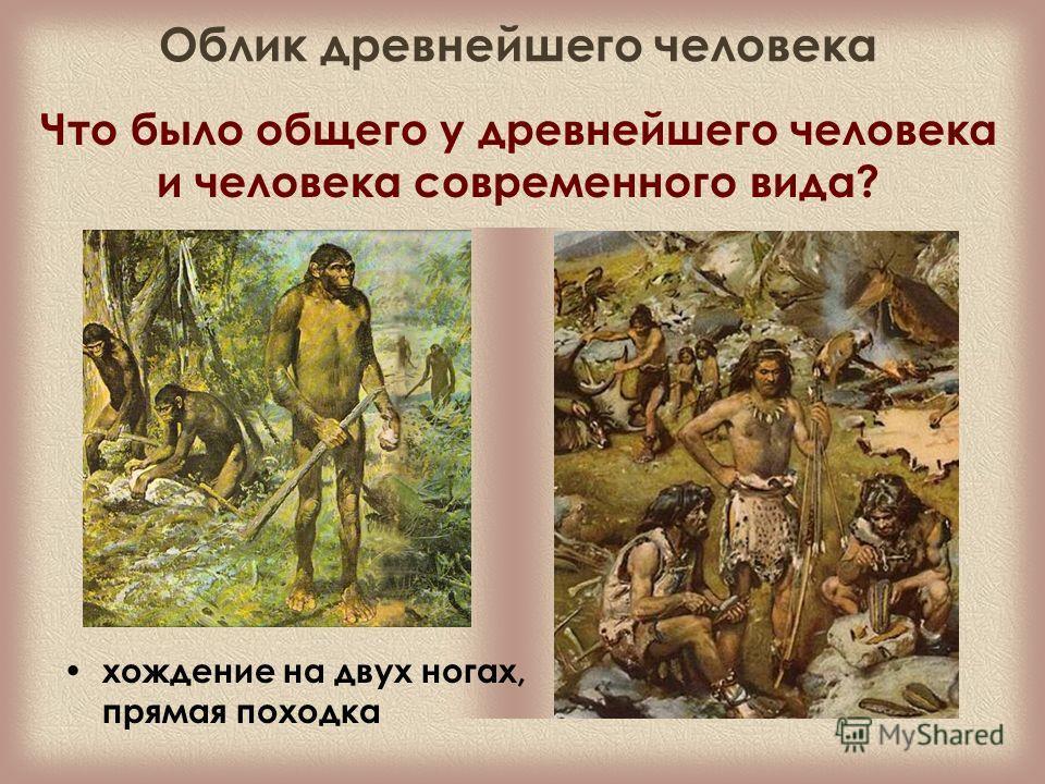 Что было общего у древнейшего человека и человека современного вида? хождение на двух ногах, прямая походка Облик древнейшего человека