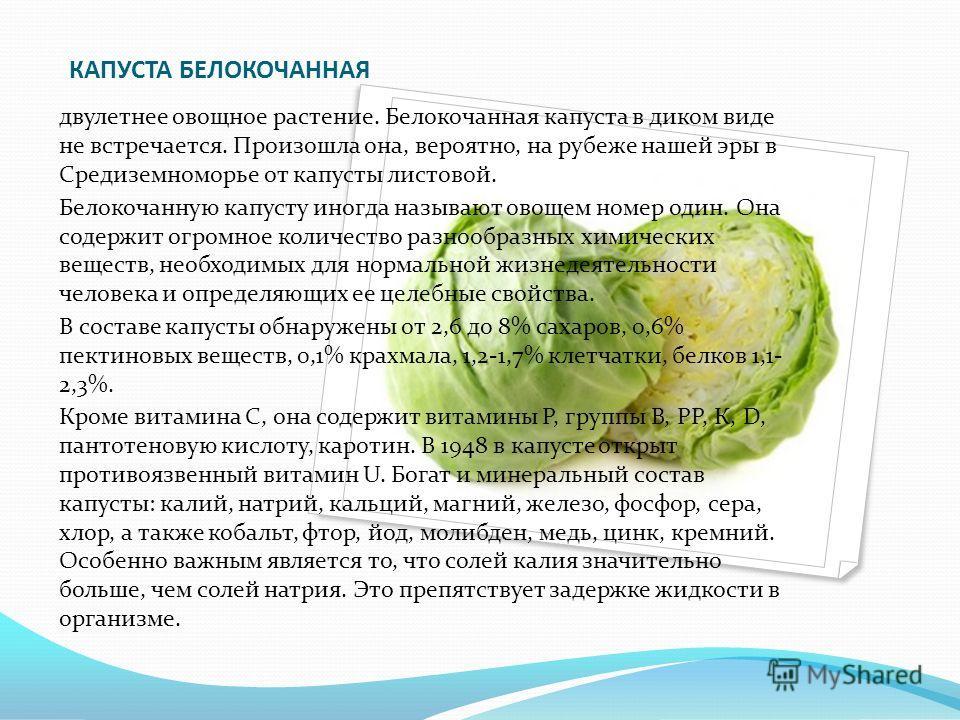 КАПУСТА БЕЛОКОЧАННАЯ двулетнее овощное растение. Белокочанная капуста в диком виде не встречается. Произошла она, вероятно, на рубеже нашей эры в Средиземноморье от капусты листовой. Белокочанную капусту иногда называют овощем номер один. Она содержи