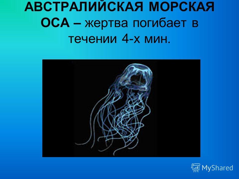АВСТРАЛИЙСКАЯ МОРСКАЯ ОСА – жертва погибает в течении 4-х мин.