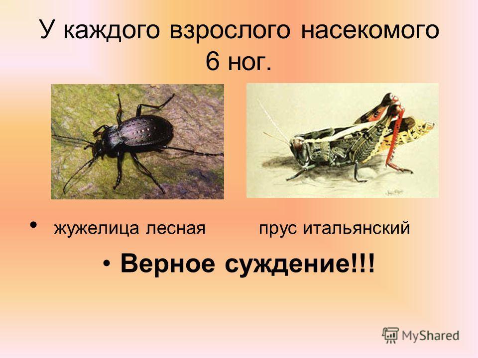 У каждого взрослого насекомого 6 ног. жужелица лесная прус итальянский Верное суждение!!!