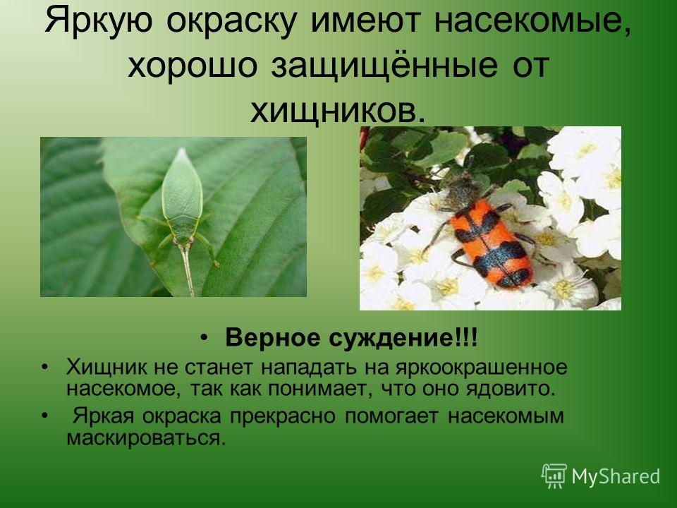 Яркую окраску имеют насекомые, хорошо защищённые от хищников. Верное суждение!!! Хищник не станет нападать на яркоокрашенное насекомое, так как понимает, что оно ядовито. Яркая окраска прекрасно помогает насекомым маскироваться.