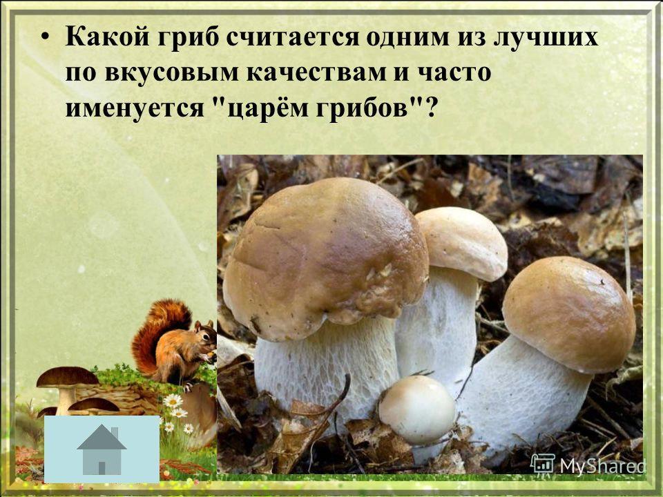 Какой гриб считается одним из лучших по вкусовым качествам и часто именуется царём грибов?