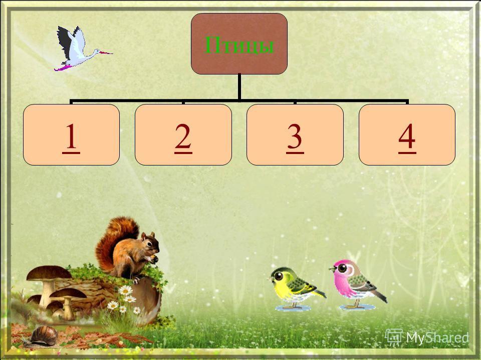 Птицы 1234