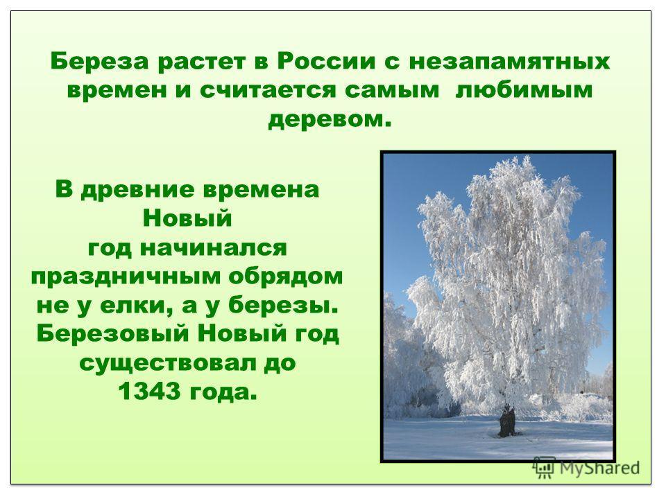 Береза растет в России с незапамятных времен и считается самым любимым деревом. В древние времена Новый год начинался праздничным обрядом не у елки, а у березы. Березовый Новый год существовал до 1343 года.