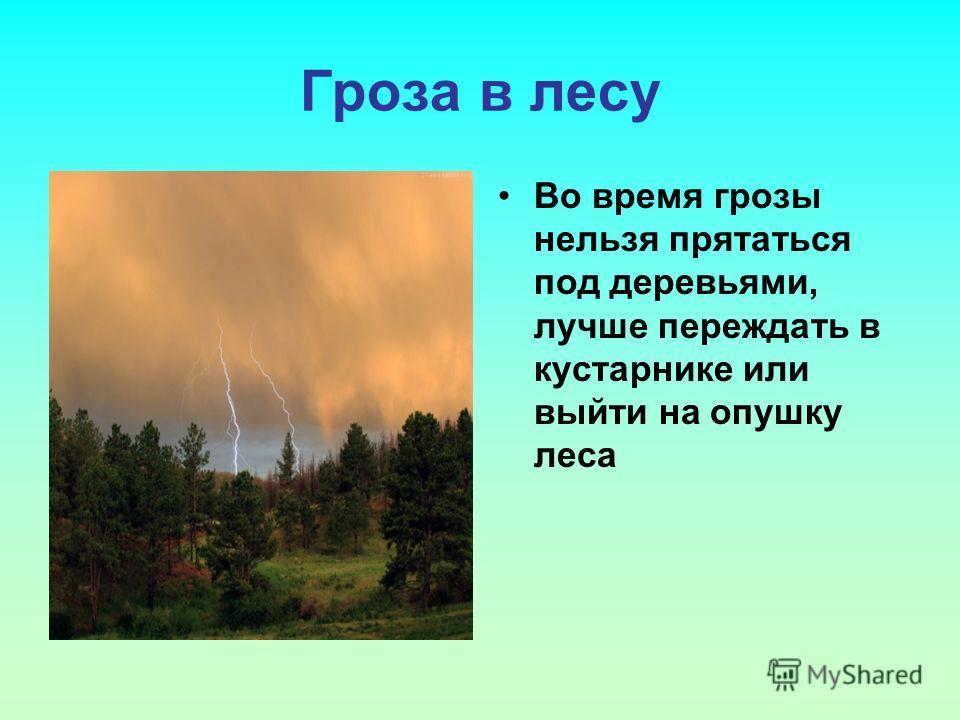 Гроза в лесу Во время грозы нельзя прятаться под деревьями, лучше переждать в кустарнике или выйти на опушку леса