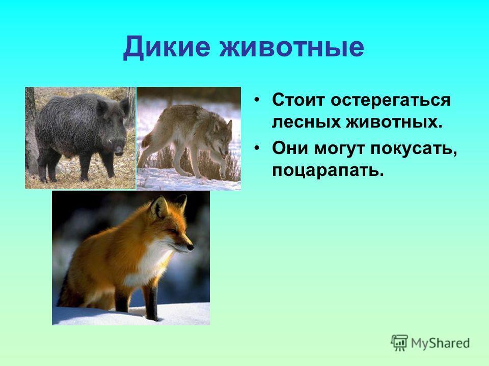 Дикие животные Стоит остерегаться лесных животных. Они могут покусать, поцарапать.