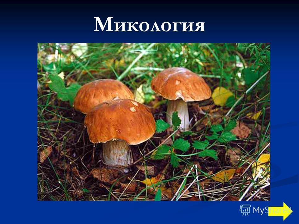 Микология