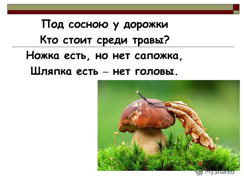 Под сосною у дорожки Кто стоит среди травы? Ножка есть, но нет сапожка, Шляпка есть – нет головы.