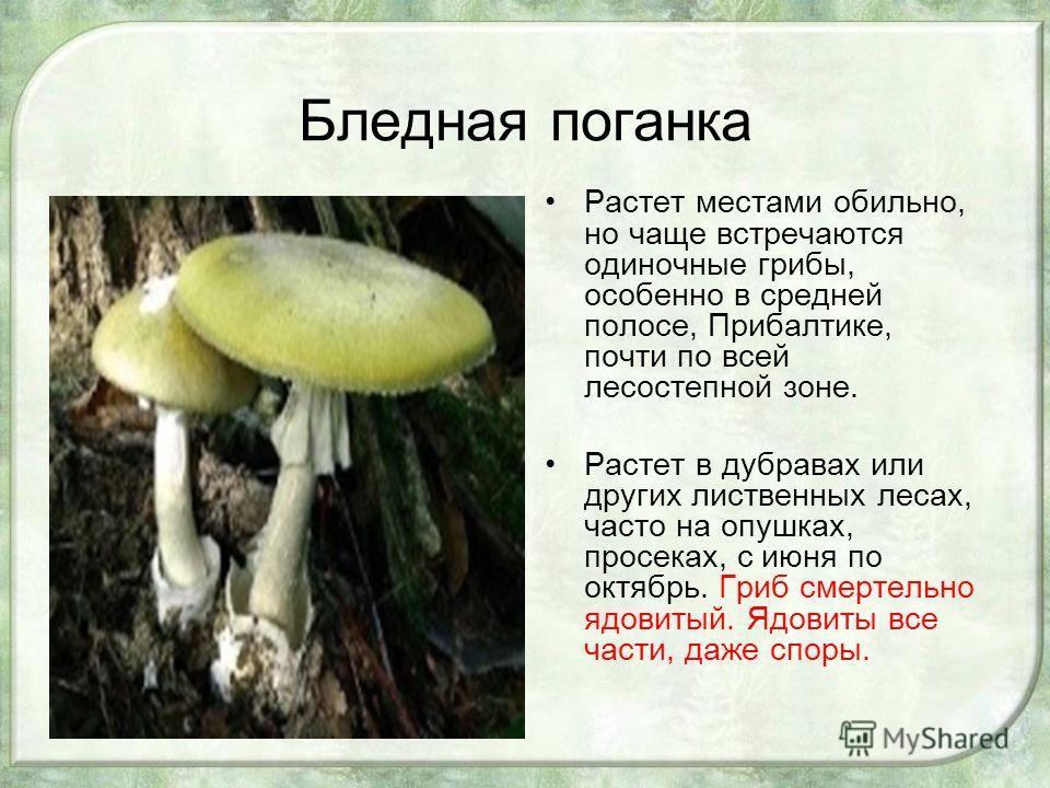 Бледная поганка Растет местами обильно, но чаще встречаются одиночные грибы, особенно в средней полосе, Прибалтике, почти по всей лесостепной зоне. Растет в дубравах или других лиственных лесах, часто на опушках, просеках, с июня по октябрь. Гриб сме
