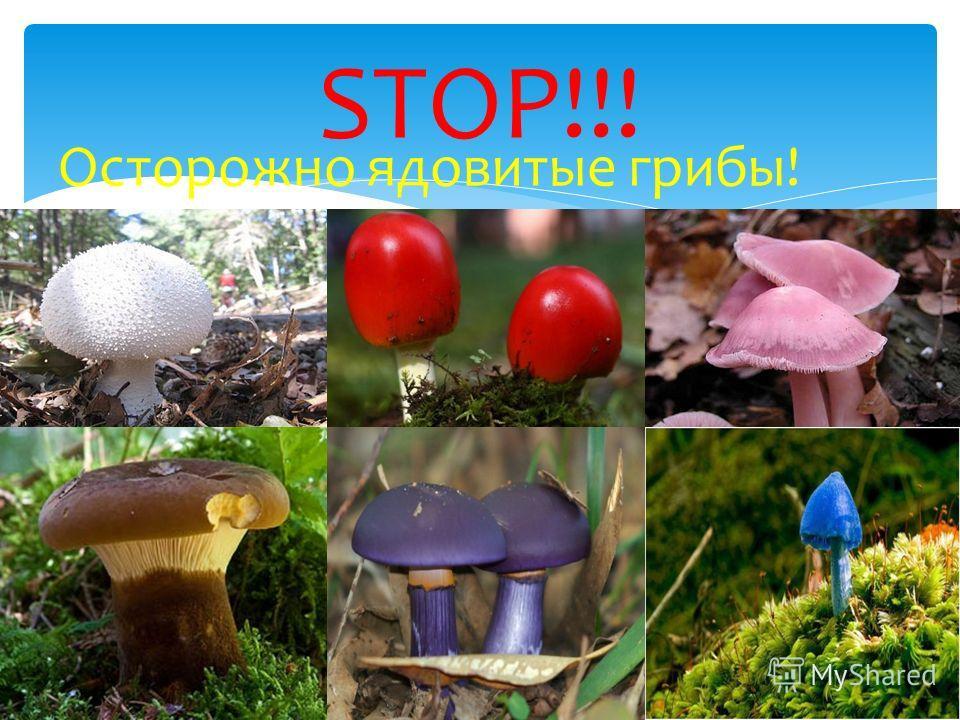 Осторожно ядовитые грибы! STOP!!!