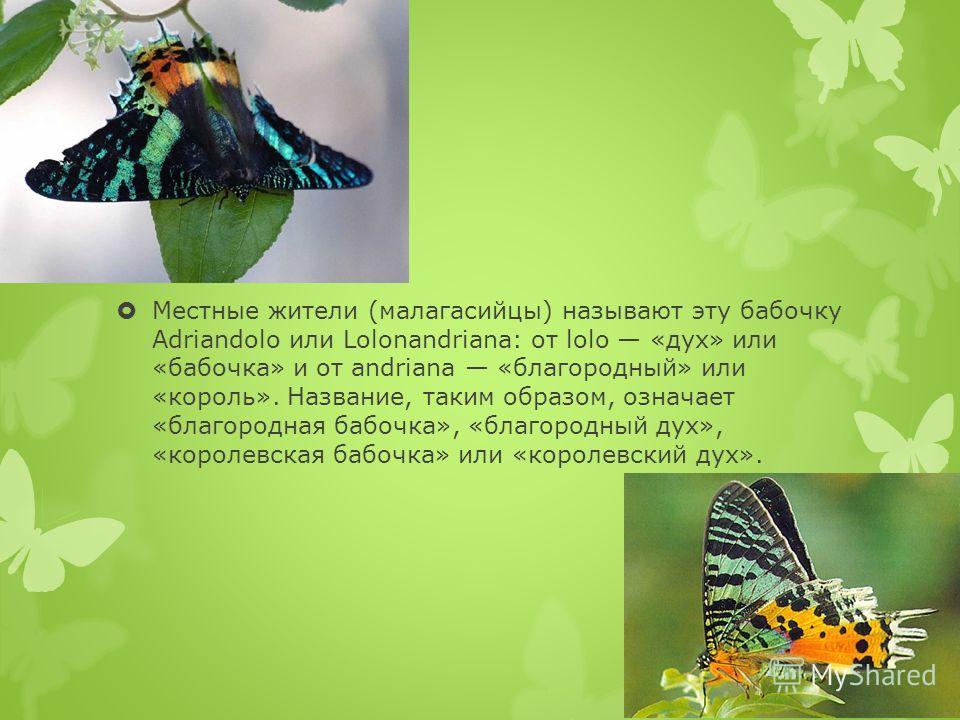Местные жители (малагасийцы) называют эту бабочку Adriandolo или Lolonandriana: от lolo «дух» или «бабочка» и от andriana «благородный» или «король». Название, таким образом, означает «благородная бабочка», «благородный дух», «королевская бабочка» ил