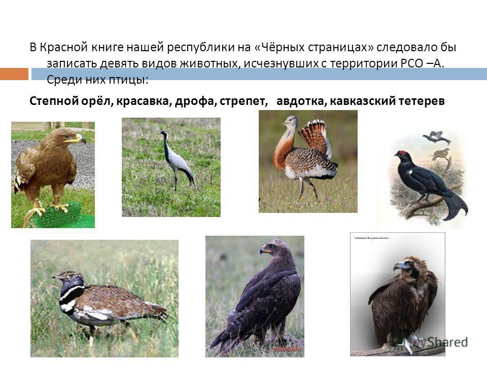 В Красной книге нашей республики на « Чёрных страницах » следовало бы записать девять видов животных, исчезнувших с территории РСО – А. Среди них птицы : Степной орёл, красавка, дрофа, стрепет, авдотка, кавказский тетерев