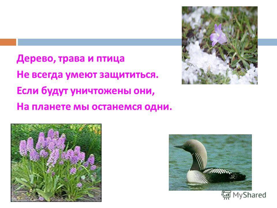 Дерево, трава и птица Не всегда умеют защититься. Если будут уничтожены они, На планете мы останемся одни.