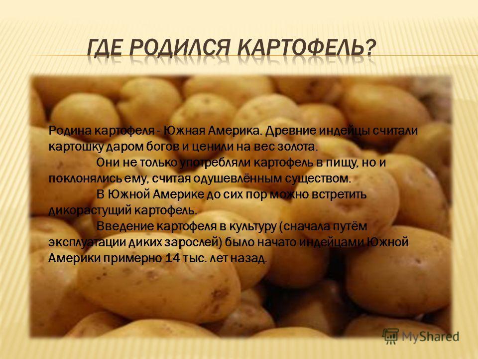 Родина картофеля - Южная Америка. Древние индейцы считали картошку даром богов и ценили на вес золота. Они не только употребляли картофель в пищу, но и поклонялись ему, считая одушевлённым существом. В Южной Америке до сих пор можно встретить дикорас
