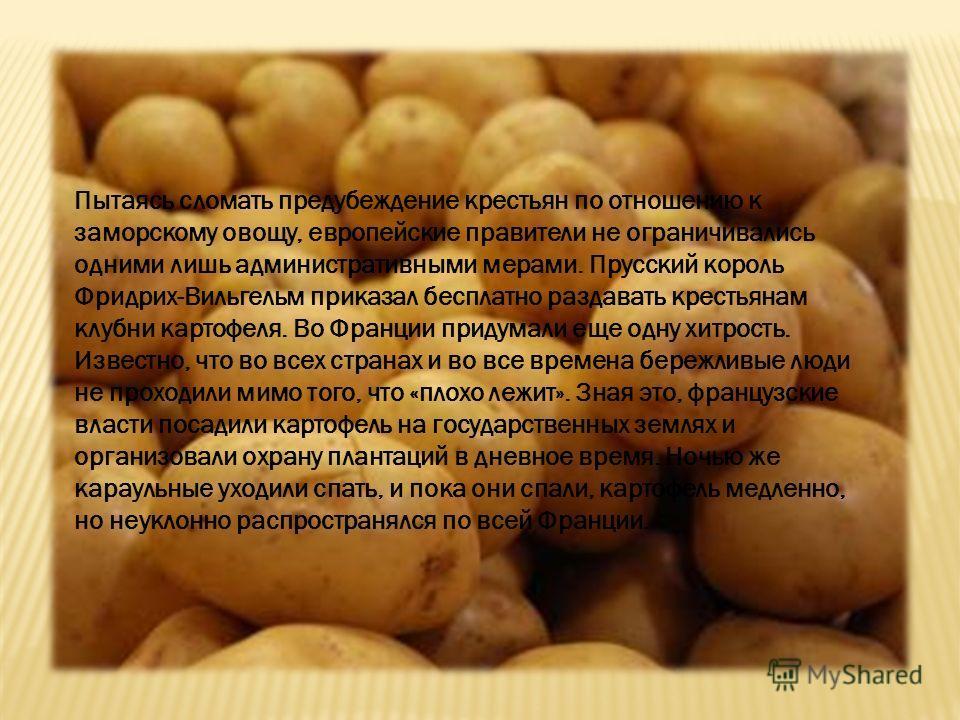 Пытаясь сломать предубеждение крестьян по отношению к заморскому овощу, европейские правители не ограничивались одними лишь административными мерами. Прусский король Фридрих-Вильгельм приказал бесплатно раздавать крестьянам клубни картофеля. Во Франц