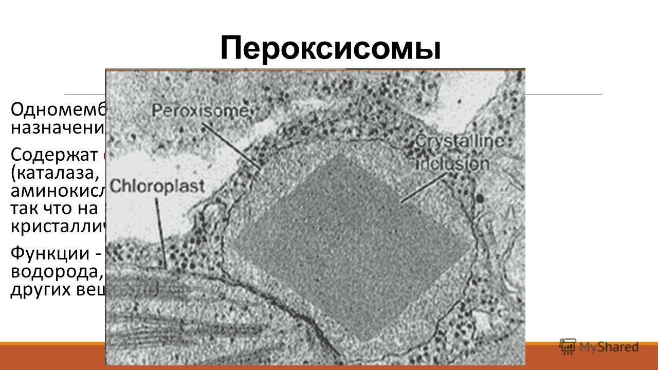 Пероксисомы Одномембранные органоиды общего назначения, диаметром ~0,5 мкм Содержат окислительные ферменты (каталаза, уратоксидаза, оксидаза-D- аминокислот) в высокой концентрации, так что на микрофотоснимках видны кристаллические структуры Функции -