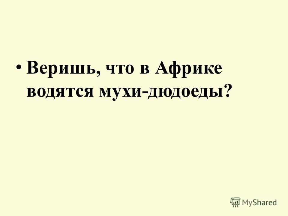 «Веришь – не веришь»