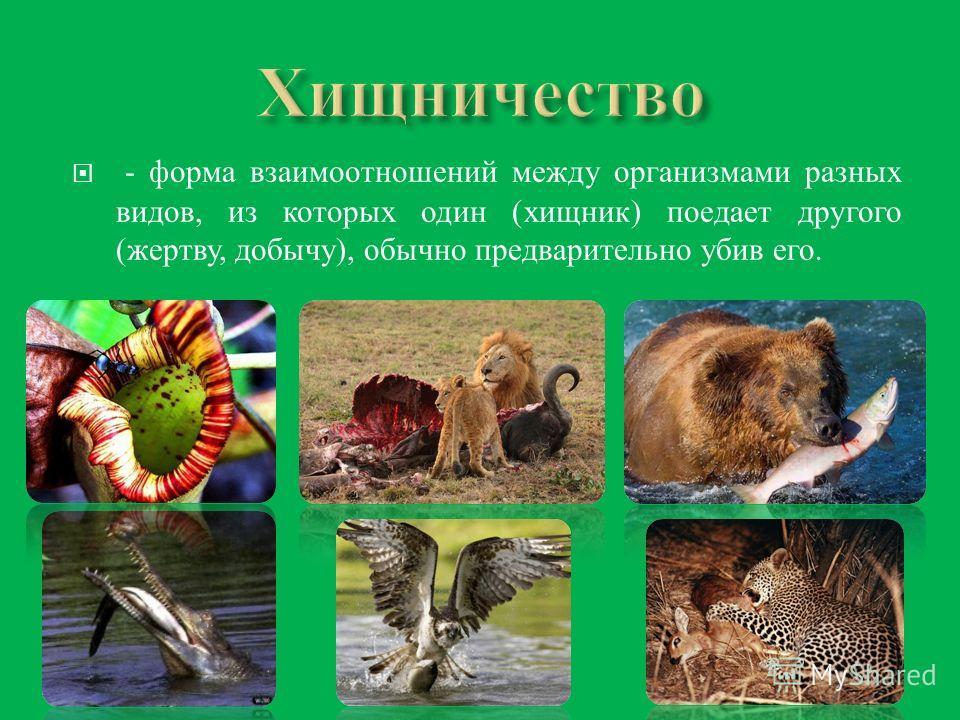 - форма взаимоотношений между организмами разных видов, из которых один ( хищник ) поедает другого ( жертву, добычу ), обычно предварительно убив его.