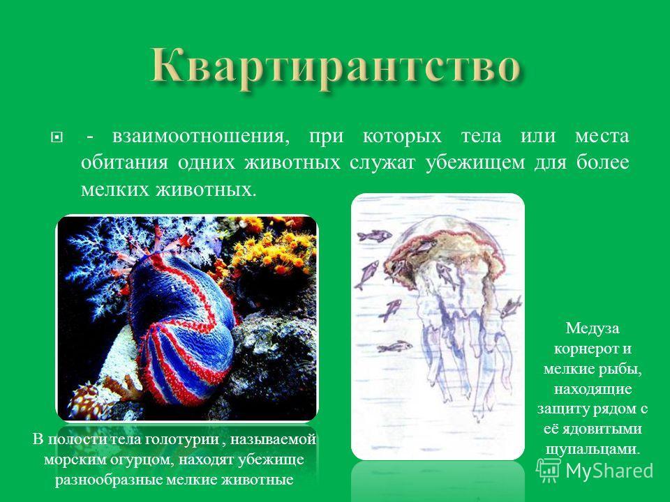 - взаимоотношения, при которых тела или места обитания одних животных служат убежищем для более мелких животных. В полости тела голотурии, называемой морским огурцом, находят убежище разнообразные мелкие животные Медуза корнерот и мелкие рыбы, находя
