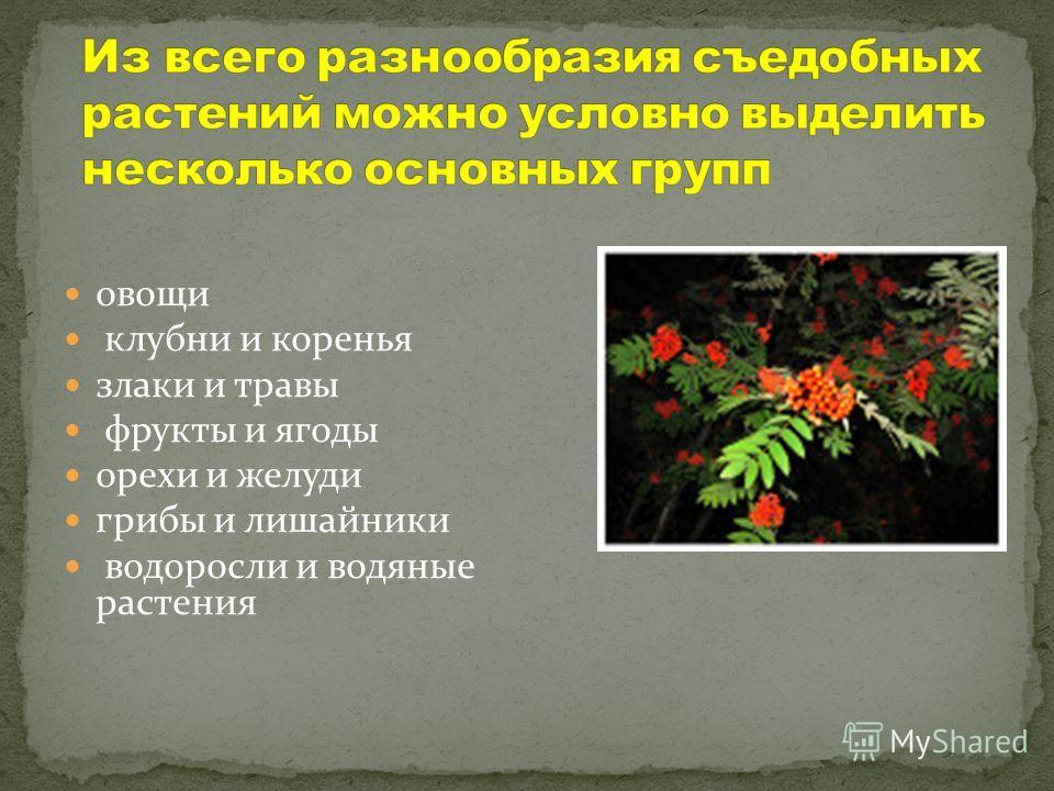 овощи клубни и коренья злаки и травы фрукты и ягоды орехи и желуди грибы и лишайники водоросли и водяные растения