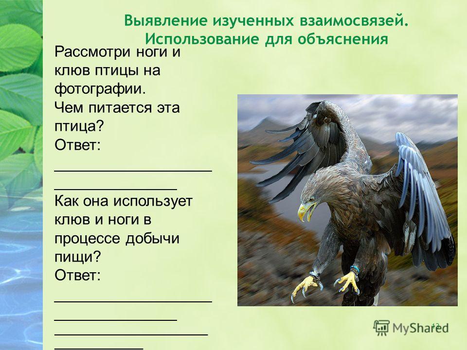 13 Выявление изученных взаимосвязей. Использование для объяснения Рассмотри ноги и клюв птицы на фотографии. Чем питается эта птица? Ответ: __________________ ______________ Как она использует клюв и ноги в процессе добычи пищи? Ответ: ______________