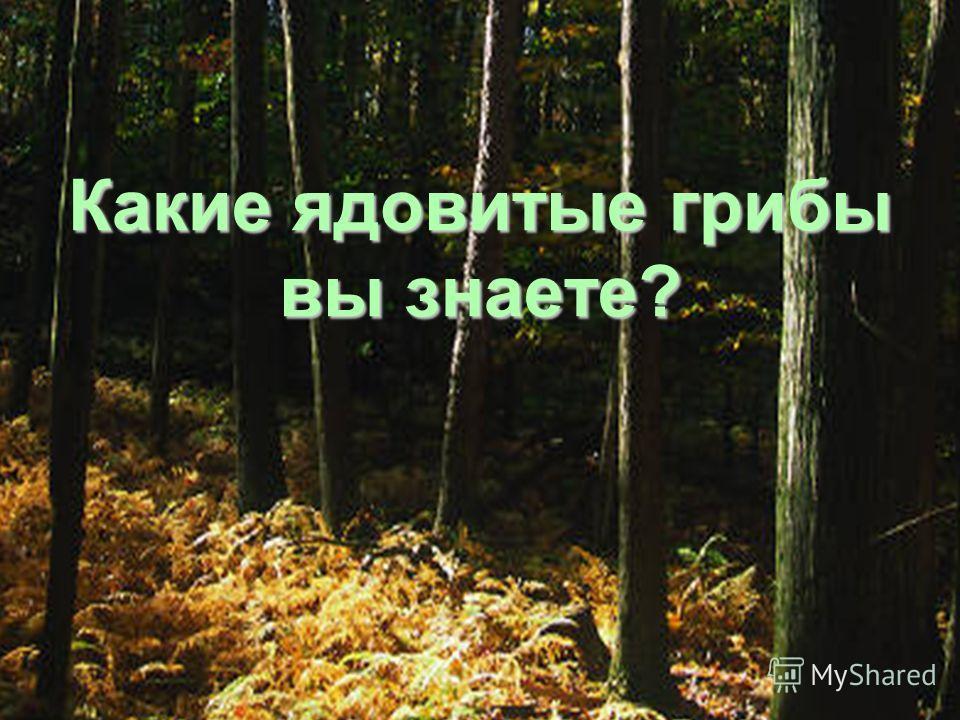 Может ли гриб съесть дом? Да. Гриб-плесень разрушает древесину. У этого гриба много названий: дедушкин табачок, галкина баня, чёртов табачок. Какое настоящее название этого гриба? Гриб-дождевик.