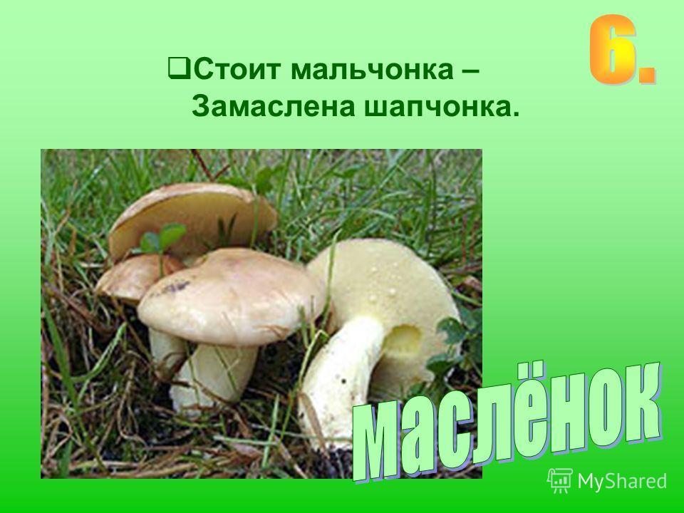 Ходят в рыженьких беретах, Осень в лес приносят летом, Очень дружные сестрички – Золотистые…