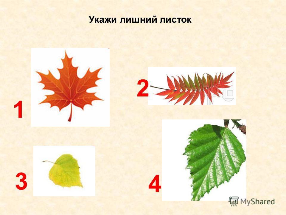 Укажи лишний листок 1 3 4 2