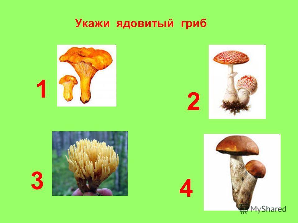 Укажи ядовитый гриб 1 4 3 2