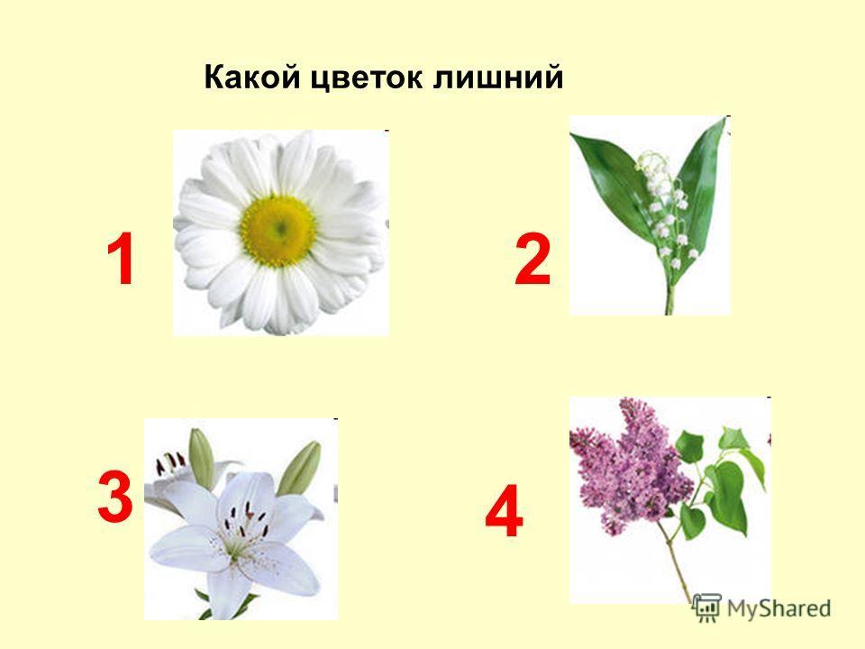 Какой цветок лишний 12 3 4