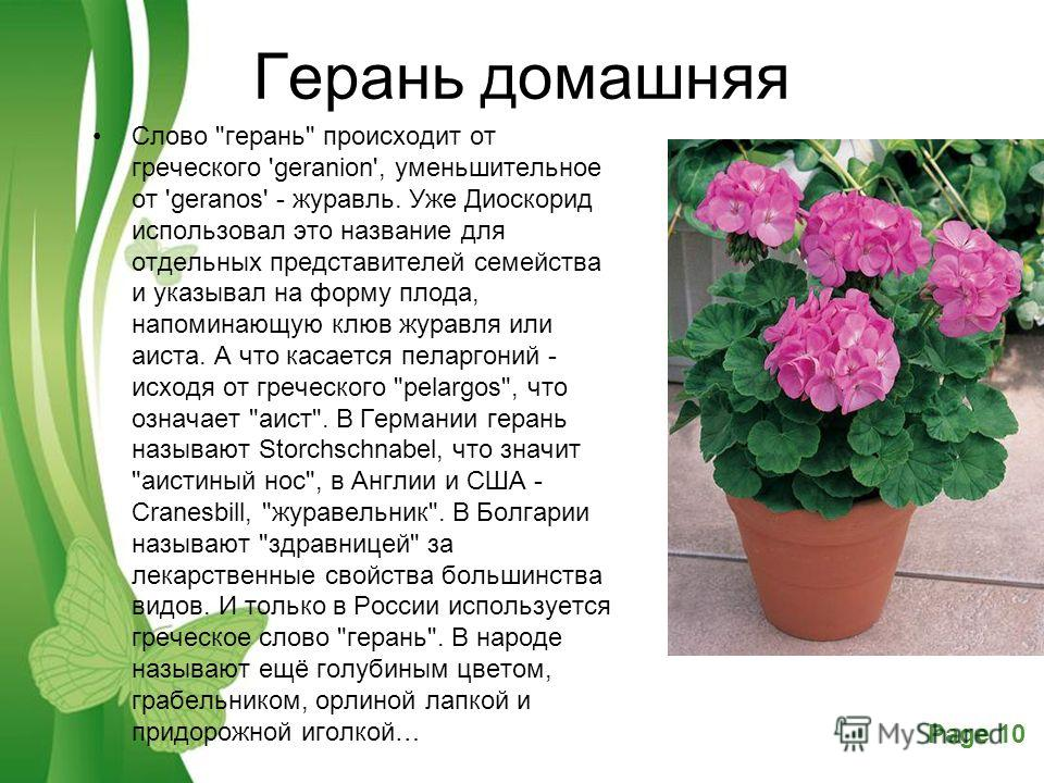 Powerpoint Templates Page 10 Free Powerpoint TemplatesPage 10 Герань домашняя Слово