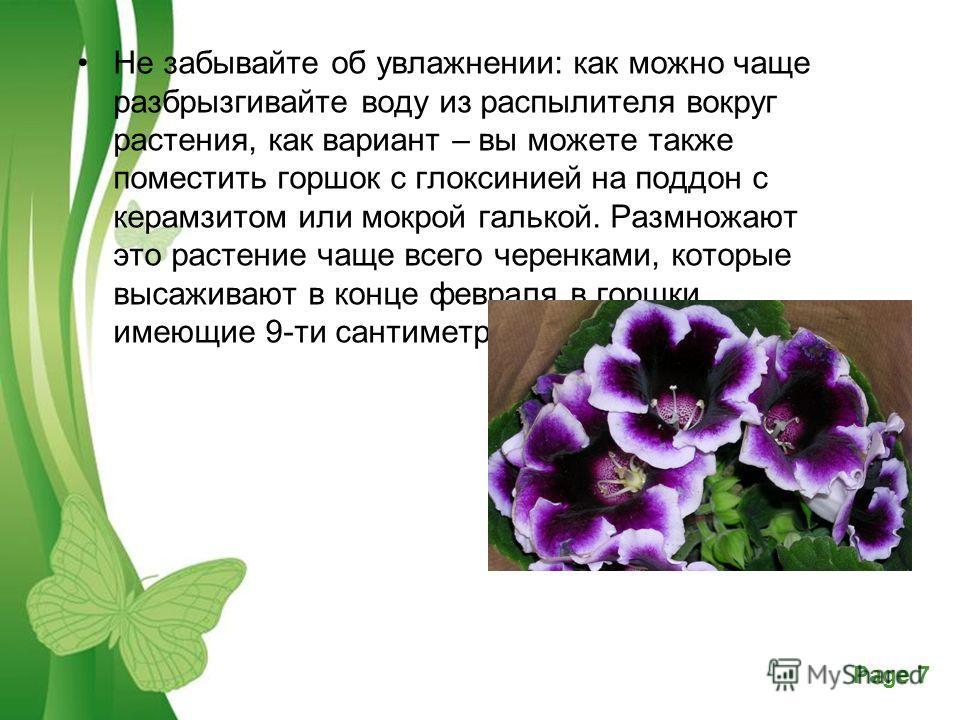 Powerpoint Templates Page 7 Free Powerpoint TemplatesPage 7 Не забывайте об увлажнении: как можно чаще разбрызгивайте воду из распылителя вокруг растения, как вариант – вы можете также поместить горшок с глоксинией на поддон с керамзитом или мокрой г