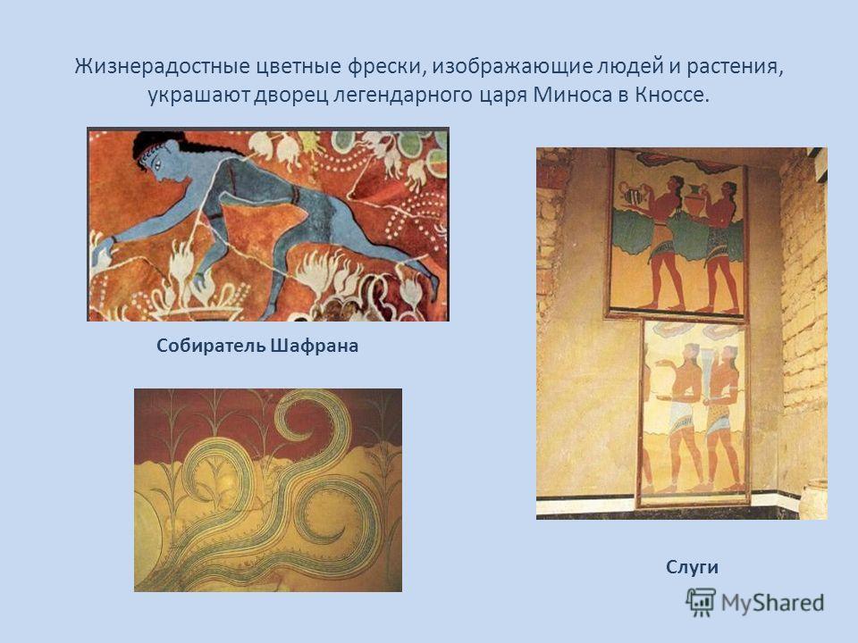 Жизнерадостные цветные фрески, изображающие людей и растения, украшают дворец легендарного царя Миноса в Кноссе. Собиратель Шафрана Слуги