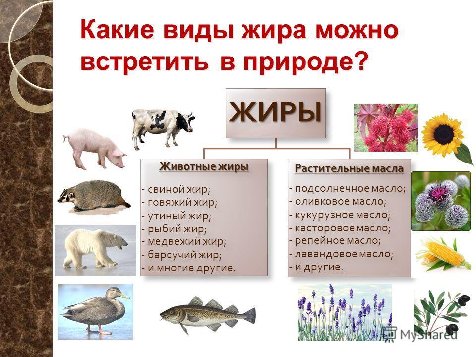 Какие виды жира можно встретить в природе? ЖИРЫ Животные жиры - свиной жир ; - говяжий жир ; - утиный жир ; - рыбий жир ; - медвежий жир ; - барсучий жир ; - и многие другие. Растительные масла - подсолнечное масло ; - оливковое масло ; - кукурузное