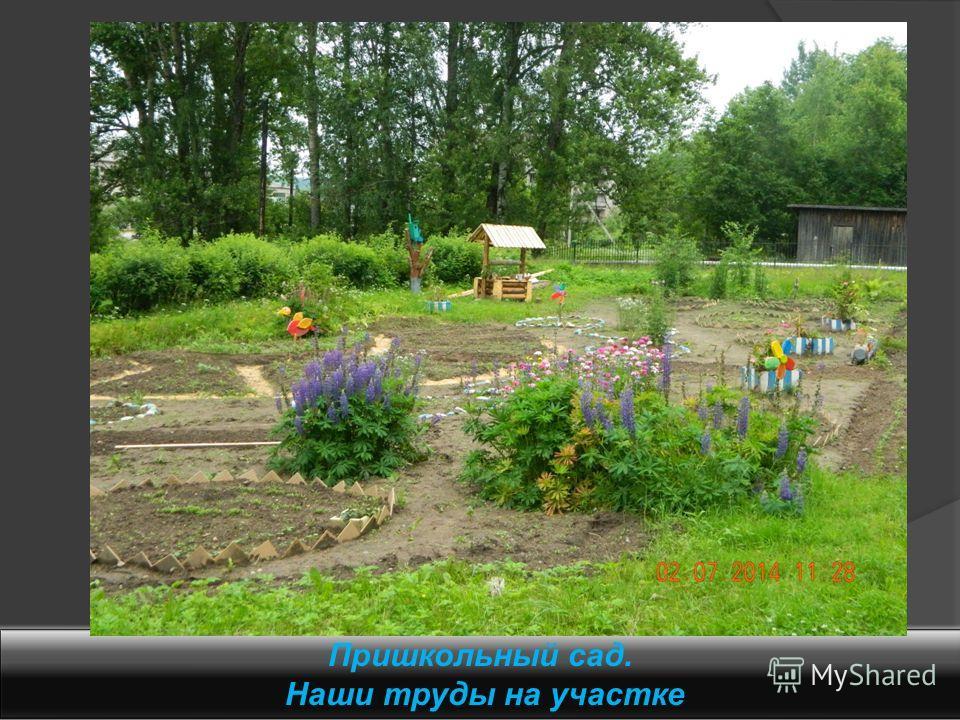 Пришкольный сад. Наши труды на участке