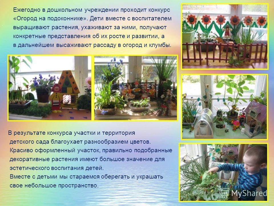 Ежегодно в дошкольном учреждении проходит конкурс «Огород на подоконнике». Дети вместе с воспитателем выращивают растения, ухаживают за ними, получают конкретные представления об их росте и развитии, а в дальнейшем высаживают рассаду в огород и клумб