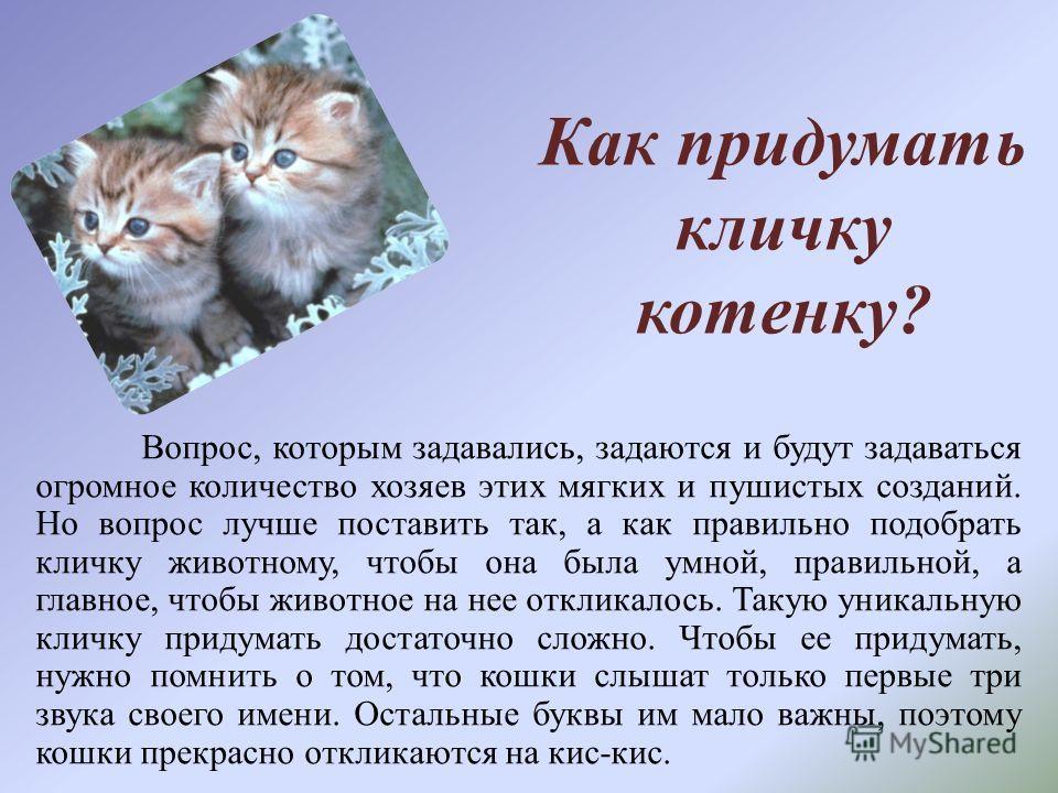 Как придумать кличку котенку? Вопрос, которым задавались, задаются и будут задаваться огромное количество хозяев этих мягких и пушистых созданий. Но вопрос лучше поставить так, а как правильно подобрать кличку животному, чтобы она была умной, правиль