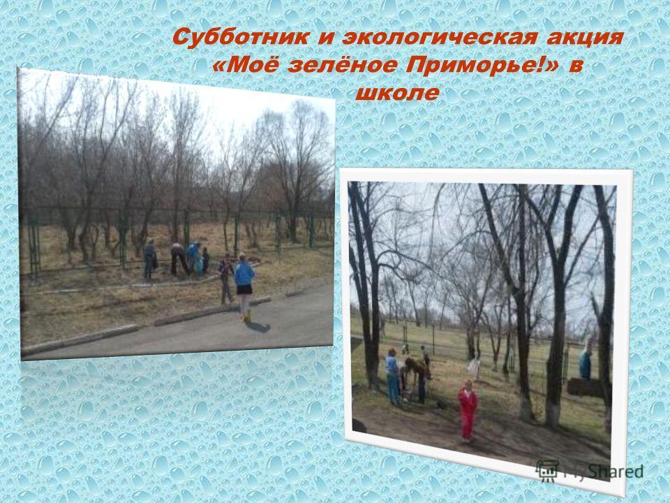 Субботник и экологическая акция «Моё зелёное Приморье!» в школе