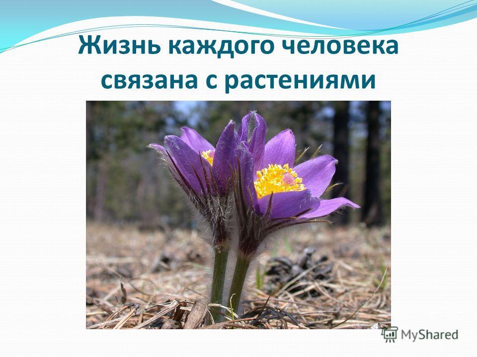 Жизнь каждого человека связана с растениями