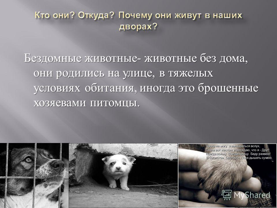 Бездомные животные - животные без дома, они родились на улице, в тяжелых условиях обитания, иногда это брошенные хозяевами питомцы. Бездомные животные - животные без дома, они родились на улице, в тяжелых условиях обитания, иногда это брошенные хозяе
