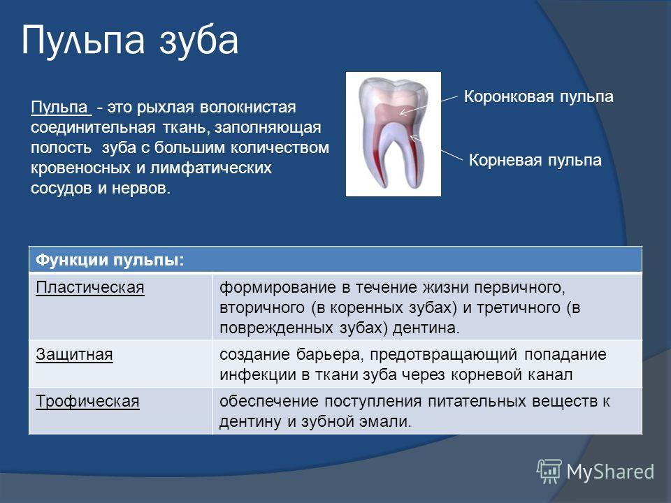 Пульпа зуба Пульпа - это рыхлая волокнистая соединительная ткань, заполняющая полость зуба с большим количеством кровеносных и лимфатических сосудов и нервов. Коронковая пульпа Корневая пульпа Функции пульпы: Пластическаяформирование в течение жизни