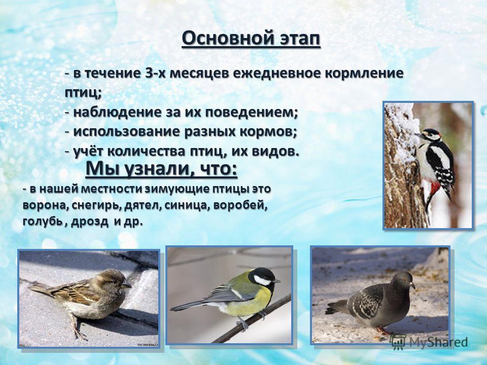 Основной этап - в течение 3-х месяцев ежедневное кормление птиц; - наблюдение за их поведением; - использование разных кормов; - учёт количества птиц, их видов. Мы узнали, что: - в нашей местности зимующие птицы это ворона, снегирь, дятел, синица, во