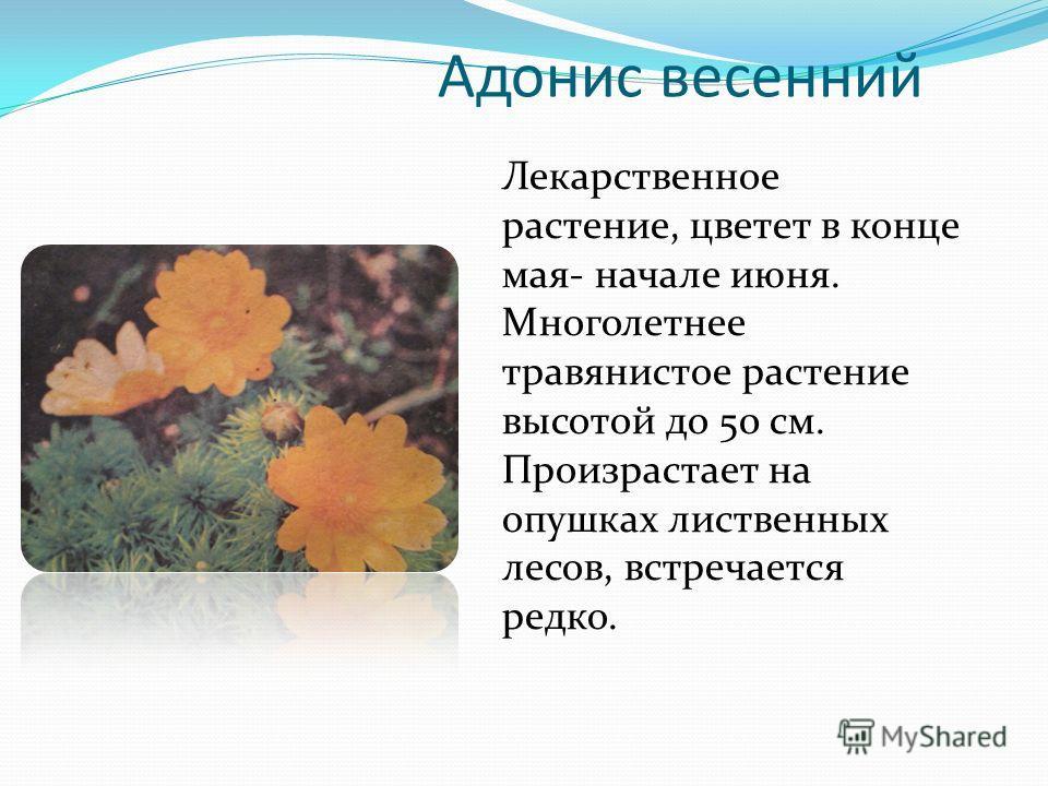 Адонис весенний Лекарственное растение, цветет в конце мая- начале июня. Многолетнее травянистое растение высотой до 50 см. Произрастает на опушках лиственных лесов, встречается редко.