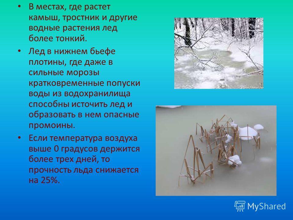 В местах, где растет камыш, тростник и другие водные растения лед более тонкий. Лед в нижнем бьефе плотины, где даже в сильные морозы кратковременные попуски воды из водохранилища способны источить лед и образовать в нем опасные промоины. Если темпер