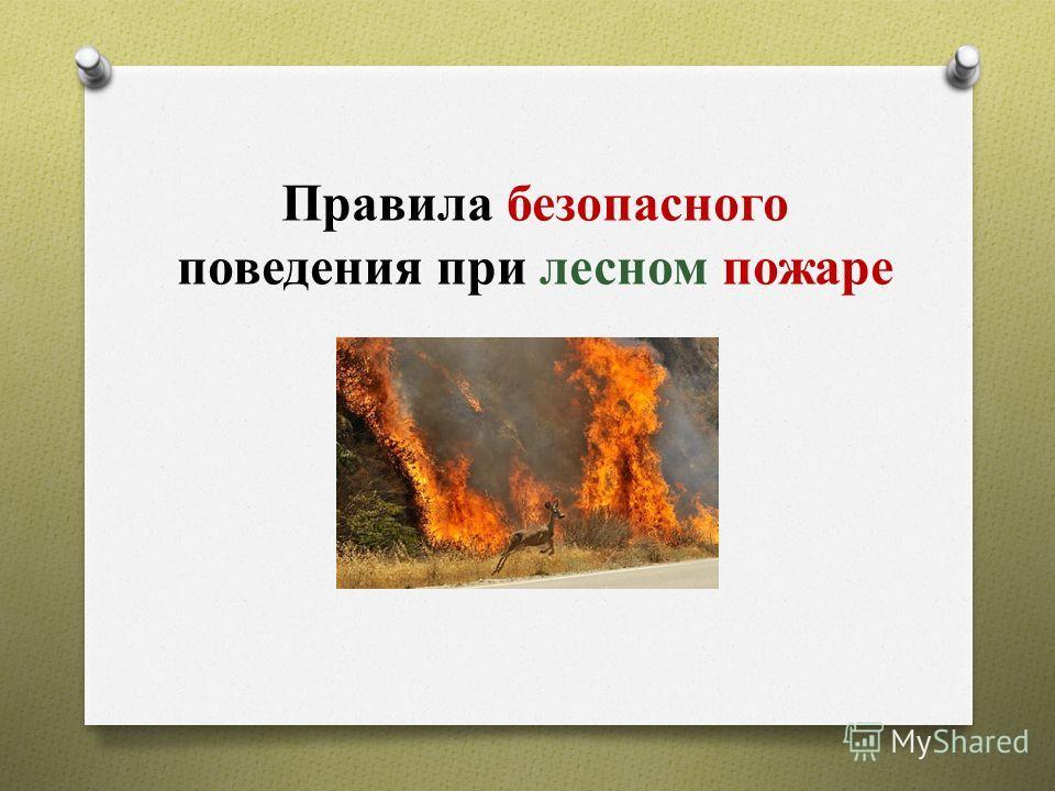 Правила безопасного поведения при лесном пожаре